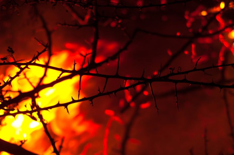 Wildfire burning with thorn in focus