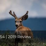 254 | 2019 Review